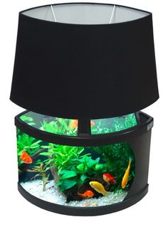 aquarium lamp...I'm not really a fish person but that is pretty cool