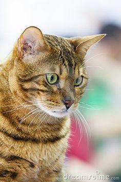 Green-eyed tabby cat gazing downward.