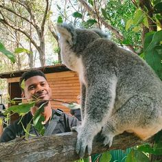 Finde someone who looks at you the way Usher looks at this Koala 😍🐨. peek-a-boo 😜 Usher Looks, Stuff To Do, Things To Do, Peek A Boos, North America, That Look, Singers, Animals, Instagram