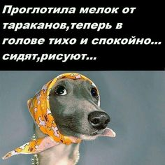 Похоже Funny Girl Quotes, Sarcastic Quotes, Funny Quotes About Life, Life Humor, Man Humor, Funny Pranks, Funny Texts, Funny Good Morning Memes, Russian Humor