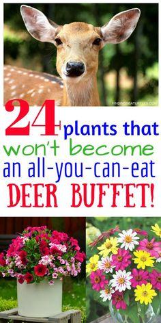 Deer Resistant Perennials Stop Planting All You Can Eat Garden Buffets