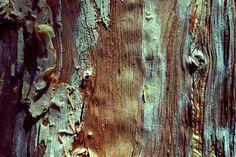 Texturas de casca de árvore.