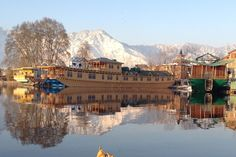 Butterfly Group of Houseboat, Srinagar