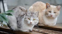 #Tier #Magazin: Der Andrang bei den Tiertafeln wird immer größer - https://www.tier-magazin.com/3478-der-andrang-bei-den-tiertafeln-wird-immer-groesser.html - #Lebensmittel, #Tafeln