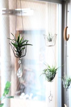 Craft Wire Art for air plants