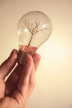 Tree in a light bulb. If I ever actually go through and do all my pins I'm going to have a lot of light bulbs decorating my house. Light Bulb Art, Light Bulb Crafts, Mini Terrarium, Fun Crafts, Diy And Crafts, Arts And Crafts, Bible Crafts, Craft Projects, Projects To Try
