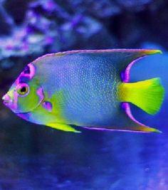⊰✿ And I'm A ღ  ღ Fish .. X ღɱɧღ ||