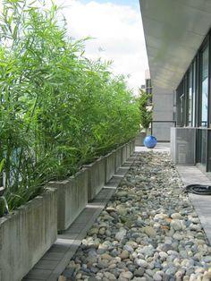 rechteckige Beton-Kübel mit Schirmbambus auf dem Balkon