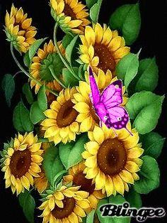 Бабочка на подсолнухах 2 Butterfly Wallpaper, I Wallpaper, Sunflowers And Daisies, Wild Flowers, Beautiful Gif, Beautiful Birds, Butterfly Flowers, Flower Art, Tinkerbell Fairies
