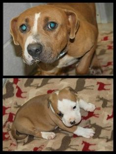 I'M PINNING BECAUSE I DON'T KNOW WHETHER THEY ARE SAFE OR NOT*** WAS WAITING TO SEE FREEDOM PICS***Mermaid: Beautiful pit mix and her pup need rescue or foster by June 17