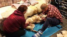 Kirsi Sinda kävi hieromassa rekikoiriamme kisojen alla. Suosittelemme kaikille koirille!