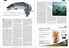 Fishmeal is still one of the main protein sources used in commercial feeds for trout and salmon. But its availability is shrinking and its cost is increasing year by year.