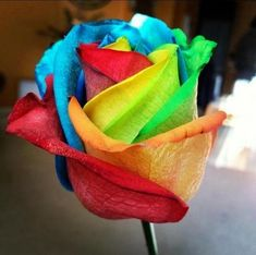 Add more Zen harmony to your house by growing these Amazing Rainbow Rose Plants. The riotous blaze of color will lift your senses and totally baffle all your visitors. You get 100 Rainbow Rose Seeds. Exotic Flowers, Beautiful Flowers, Dye Flowers, Colorful Flowers, Beautiful Things, Decorating Tools, Cake Decorating, Rosas Gif, Border Plants