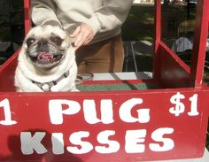 The story of Cubby a loveable, spunky Pug and how she overcame the odds.
