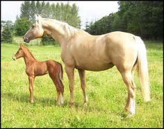 Kinsky mare