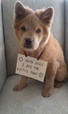 Haha! I'm so glad my dog isn't the only one with that nasty habit. I'm totally making Roscoe a sign like this.
