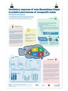 Scientific Poster on Behance … Academic Poster, Research Poster, Poster Layout, Poster Ads, Scientific Poster Design, Poster Presentation Template, Conference Poster, Ticket Design, Poster Design Inspiration