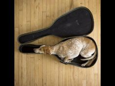 Can you teach me how to play the dog!