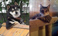 COOL DOG V COOL CAT