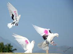 Dove Photo by Prabhu Viswa — National Geographic Your Shot