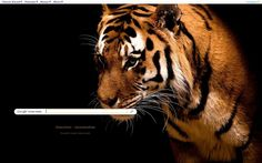 Tiger Theme from ShinySearch