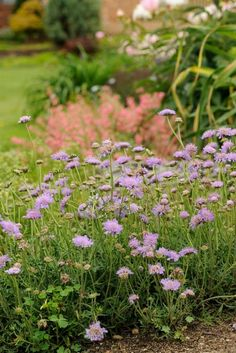 Some live for 50 years; others, for three. Find out which perennials will give you longlasting pleasure in your garden.