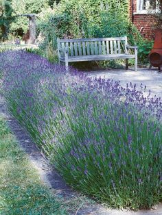 Ornamental Grass Landscape, Ornamental Grasses, Big Garden, Spring Garden, Herb Garden, Vegetable Garden, Family Garden, Garden Club, Garden Beds