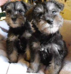 Ollie babies