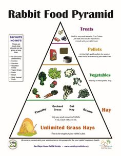 House Rabbit Society recommends a limited pellet diet for rabbits. Pellets should be the smallest part of a healthy rabbit's diet. The Rabbit Food Pyramid (pdf) is a good visual representatio… Pet Bunny Rabbits, Dwarf Bunnies, Meat Rabbits, Raising Rabbits, Baby Bunnies, What To Feed Rabbits, Easter Bunny, Bunny Bunny, Bunny Toys