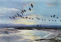 Sir Peter Markham Scott: The Wash at Dawn. Antiques Value, Ducks Unlimited, Bird Paintings, Natural History, Galleries, Dawn, Art Drawings, Art Photography, Hunting