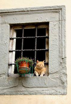 A cat enjoying the Tuscan sun in Cortona, Italy.