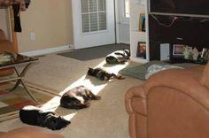 Find a sunbeam, take a nap.