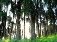 bosque_encantado.jpg (600×450)