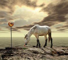 Les photomontages de Caras Ionut Photo