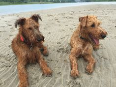 Our Rhode Island summer vacation.  We spent every day on Dog Island, Narragansett, RI