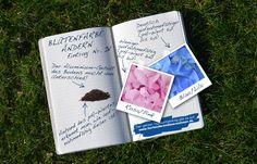 Für Hortensien gilt: alkalischer Boden = rosa Blüten saurer Boden = blaue Blüten
