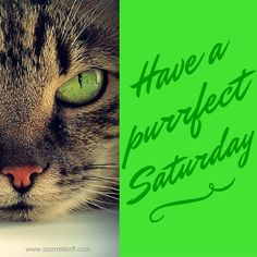Have a purrfect Saturday!