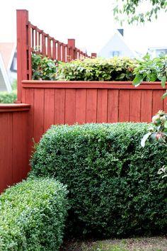 plank falurött Garden Privacy, Garden Fencing, Backyard Fences, Fence Gate, Green Rooms, Plant Species, Outdoor Living Areas, Plant Design, Pool Houses