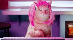 I love cat gifs and dog gifs. Funny Cats, Cute Cats, all the time.Big animals gif lover too. Gifs, Funny Cat Videos, Funny Cats, How To Wear A Wig, Cat Work, Halloween Wigs, Cheap Halloween, Types Of Cats, Animation