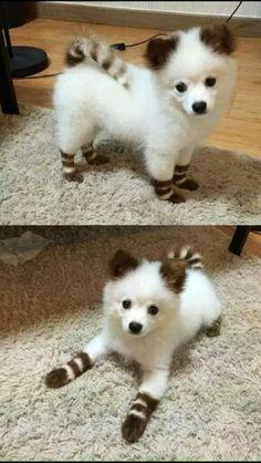 Juguetón. Too cute!!! qb