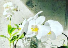Das Orchideen-Experiment: Orchideen in Wasser kultivieren – Buch-Rezension – faunundfarn.de Ficus, Flower Power, Cluster, Zero Waste, Experiment, Entrepreneurship, Garden, Flowers, Plants
