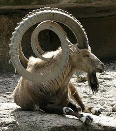 incredible Horns by abbas muhammad