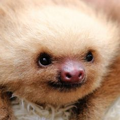 """""""When you're this fuzzy, it would be a crime NOT to be this happy."""" 