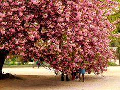 Les Jardins des Plantes, Paris