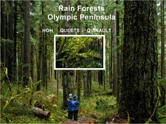 Rain Forests - Quinault, Queets and Hoh - on the Olympic Peninsula in USA