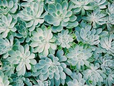 Photograph Succulent by Marisa Nourbese on 500px