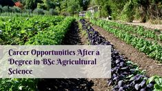 Choose from a broad range of courses in BSc agricultural science from one of the prestigious colleges in Punjab - Dolphin(PG) College. Agricultural Science, Career Opportunities, Private Sector, Colleges, Livestock, Opportunity, Students, Range, Marketing