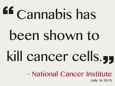 Does cannabis kill cancer? The National Cancer Institute says yes.
