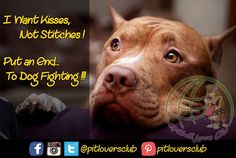 Put an End to Dog Fighting!!... Who Agrees?