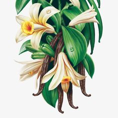 Botanical illustration by Tomat Design.